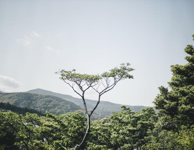 landscape rf50mm f1.2 EOS R