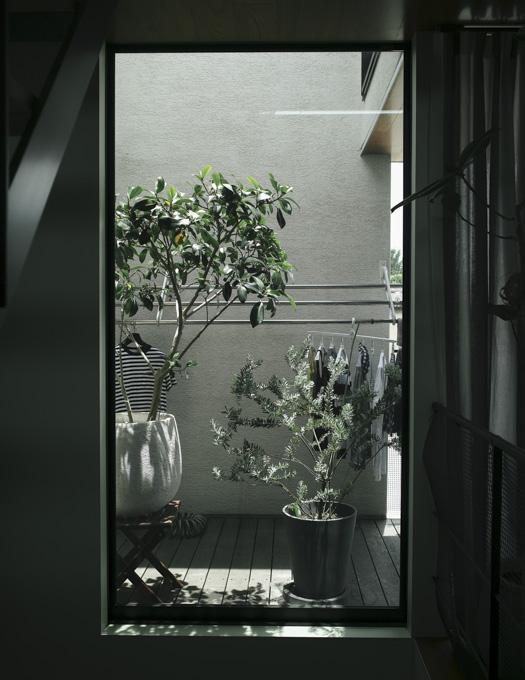 Summicron 28mm f2 ASPH plants 風景