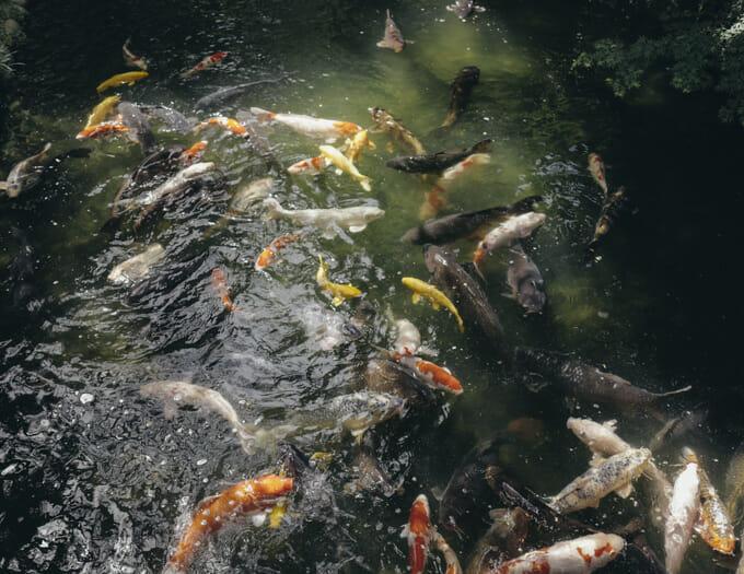 LEICA Q 鯉 風景