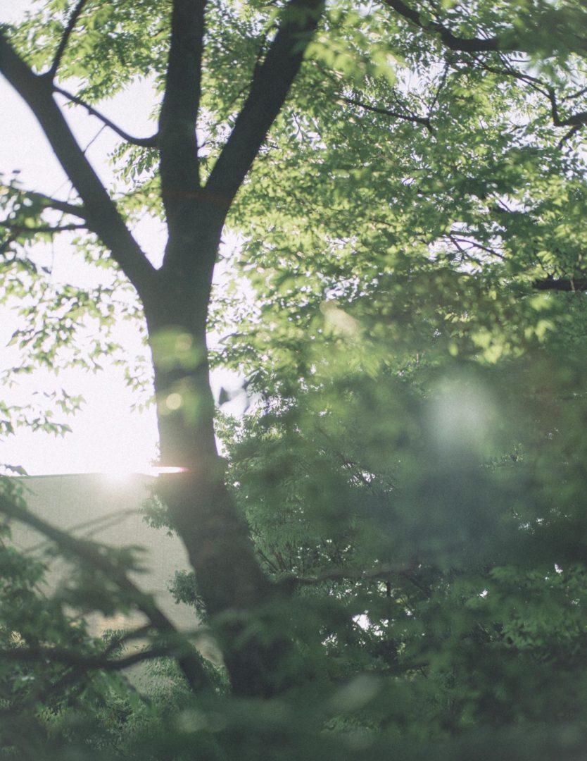 風景 実写 LEICA SUMMILUX 50mm f1.4 M9