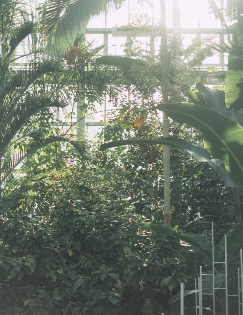 X-Pro3 XF35mm f1.4 plants