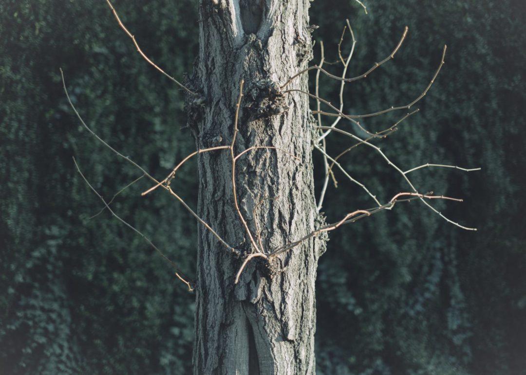 X-Pro3 XF35mm f1.4  tree 作例