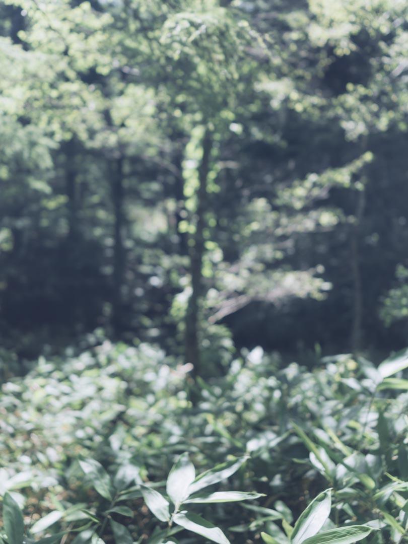 RX1RII 風景 単焦点 作例