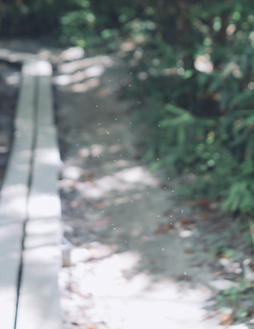 RX1RII 風景 ボケ