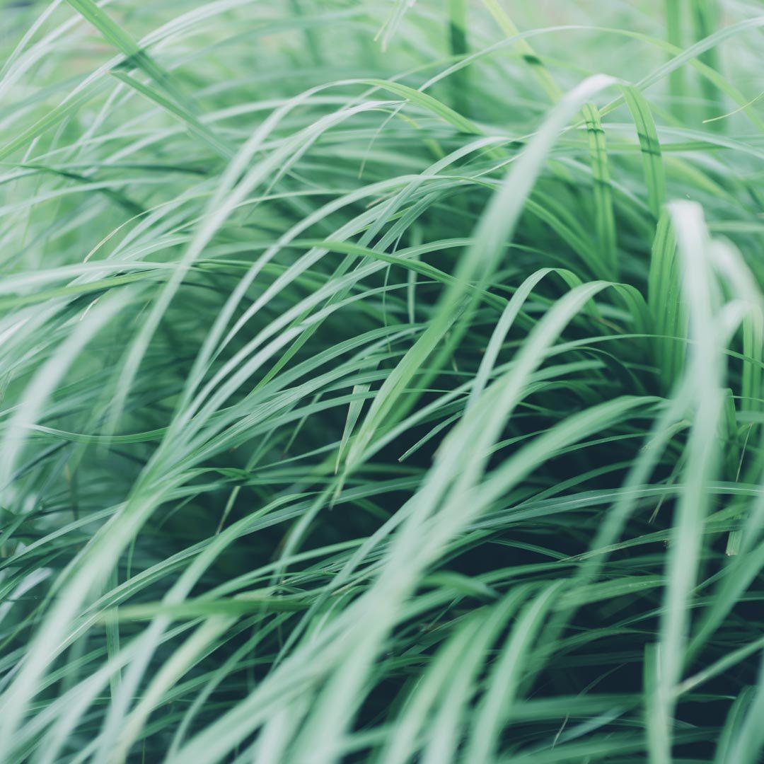 ライカ leica SL noctilux 50mm f0.95 asph 風景 作例 review