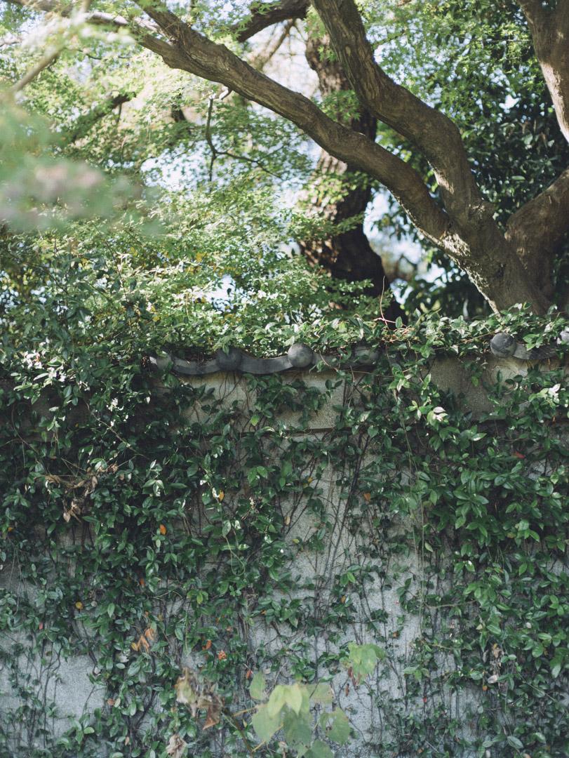 noctilux 50mm f0.95 asph. 京都 Kyoto ノクチ ルクス 単焦点