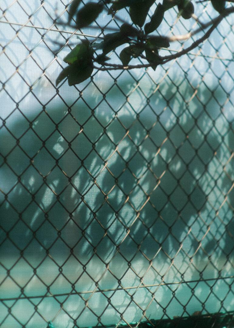 fujifilm x-s10 rokkor 58mm f1.2 オールドレンズ ミノルタ ロッコール MINOLTA レビュー review スナップ 作例