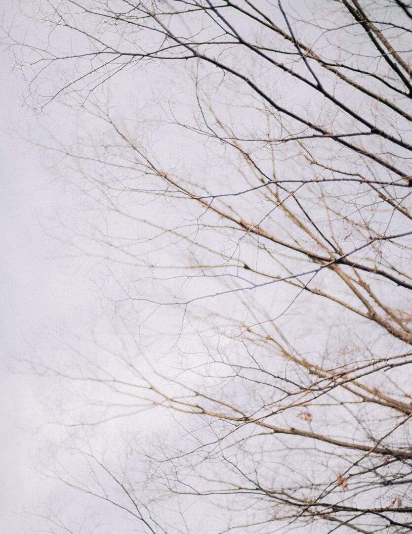 nikon z5 Ai AF NIKKOR 50mm f1.4D レビュー 作例 review 実写 風景 オールドレンズ megadap mtz11